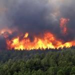 Предупреждения-Лесной-пожар